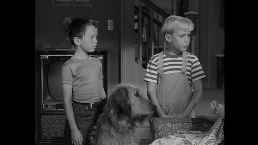 Dennis The Menace: Dennis and the Dog